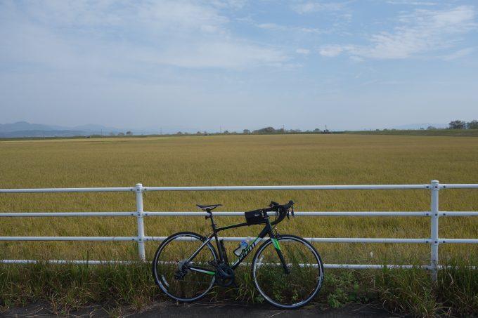 出雲路自転車道から見る稲穂