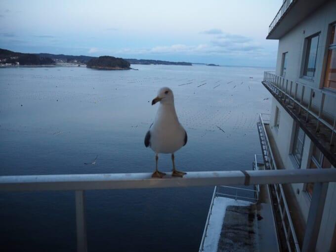 南三陸ホテル観洋 ベランダの海鳥
