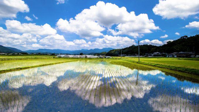PHOTOMETI 熊本県の水田