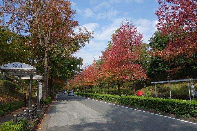 2020東京オリンピックロードレース 多摩聖ヶ丘地区の道路